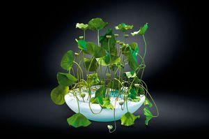 Round Bowl Lotus, Vaso in resina laccato bianco